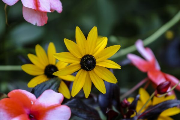 Floral-Essence-1