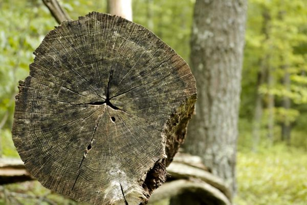 Log-with-Bokeh-1