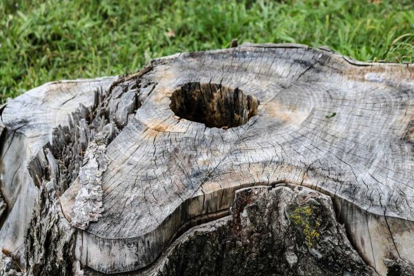 Tree-Stump-1
