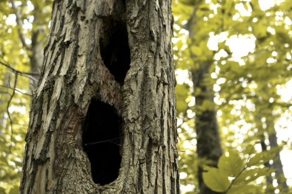 Tree-trunk-With-Holes-1